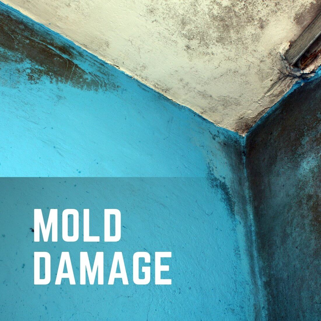 Mold Damage Remediation Services